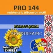 Floarea-soarelui PRO 144. Compania Seminte Fundulea