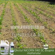 Efectul NICORN 040 SC asupra mohorului
