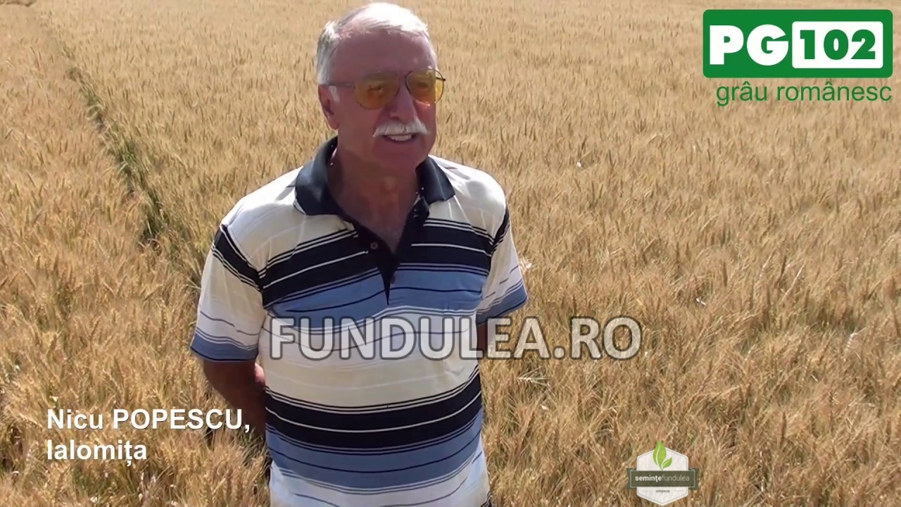 Fermierul Nicu Popescu despre graul romanesc PG 102, genetica Fundulea