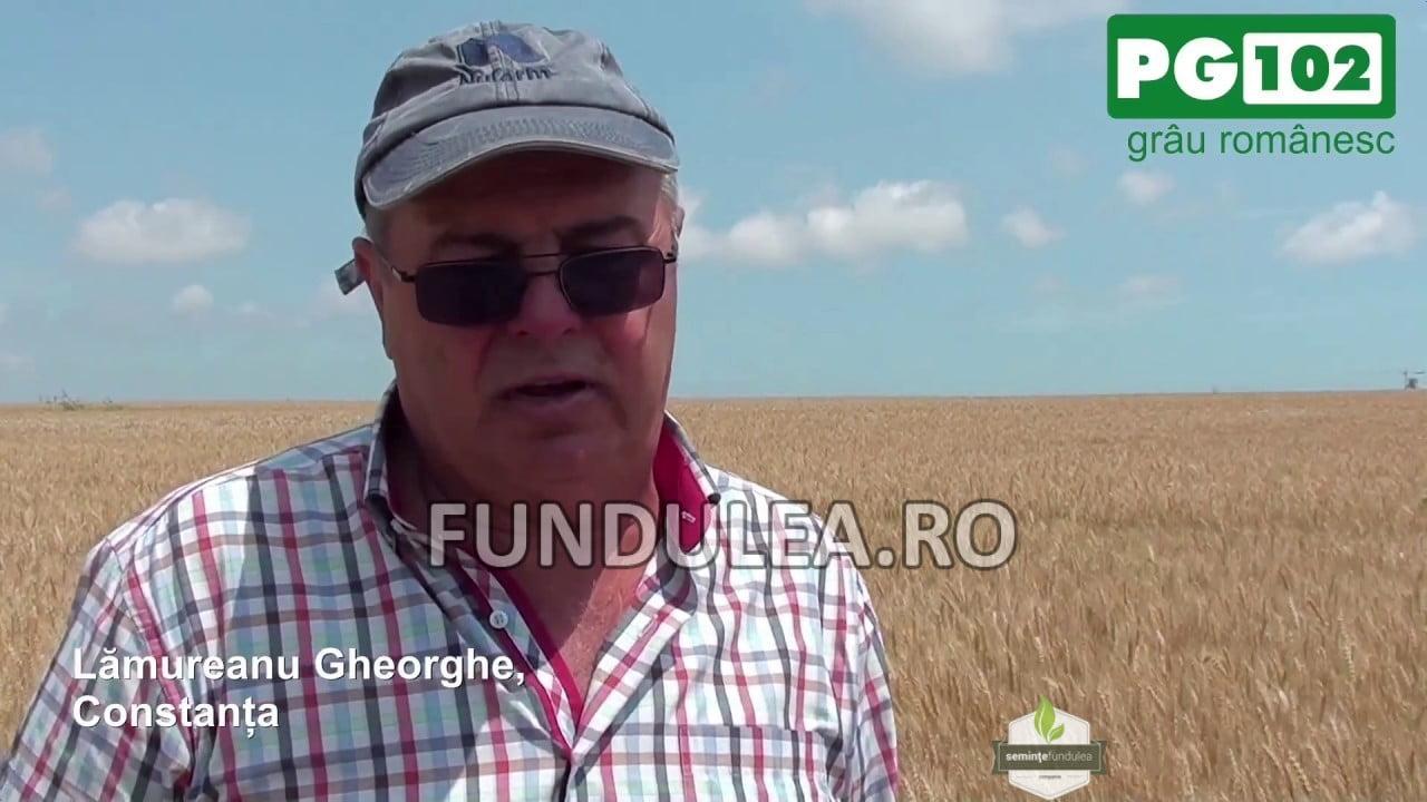 Fermierul Lamureanu Gheorghe despre graul romanesc PG 102, genetica Fundulea